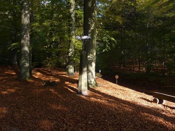 Herbstwald der Granitz auf Rügen