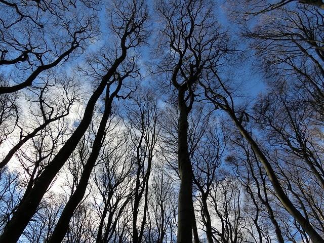 Rügen: Wald im Winter